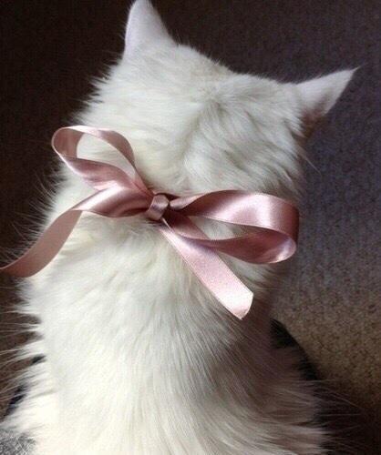nastro gatto.jpg
